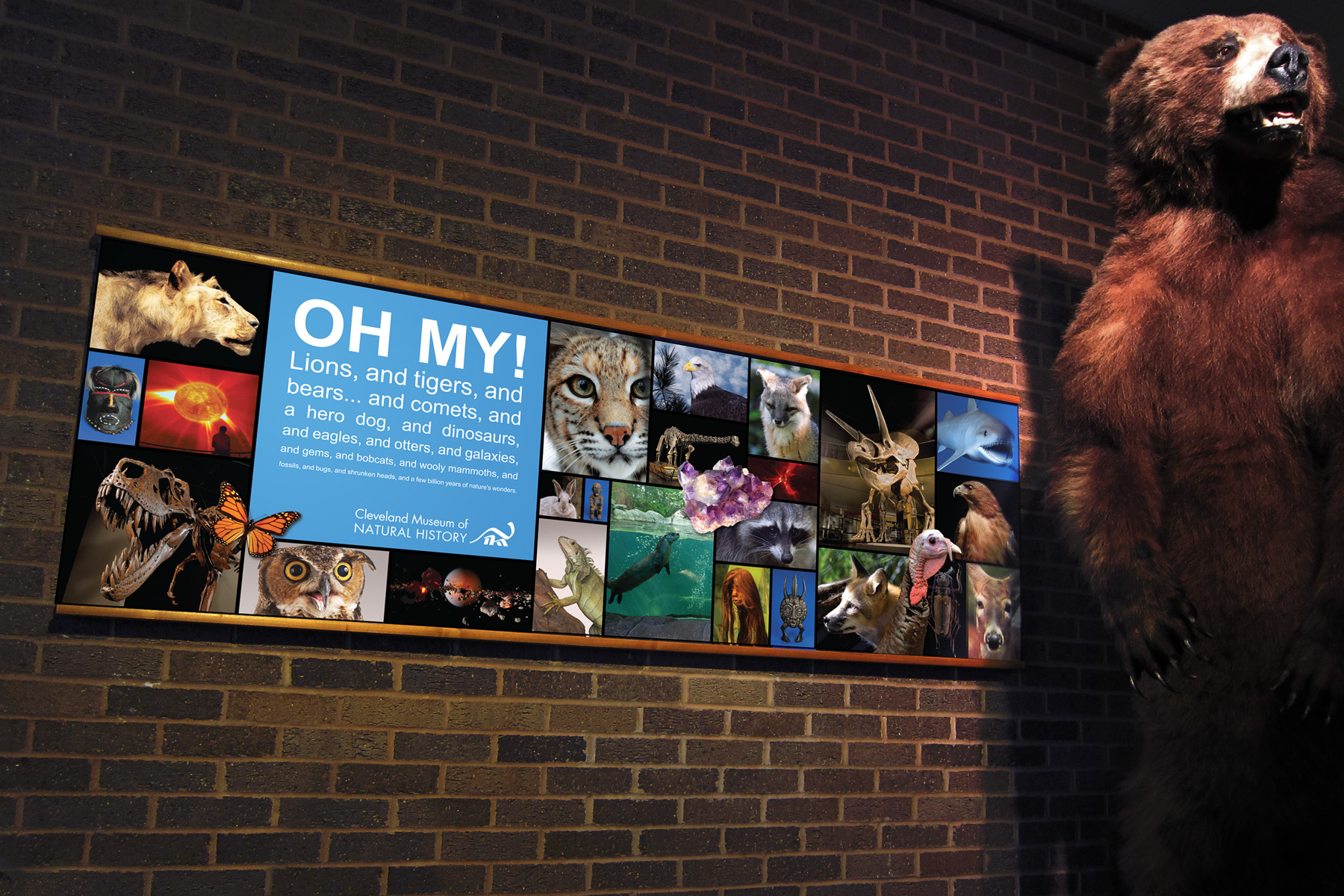 CMNH large format graphic