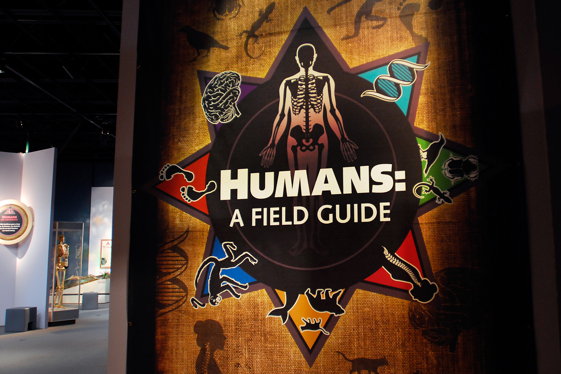 CMNH Exhibit logo design